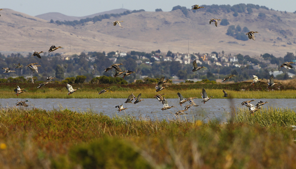 NAPA-SONOMA SALT MARSH RESTORATION PIPELINE PROJECT