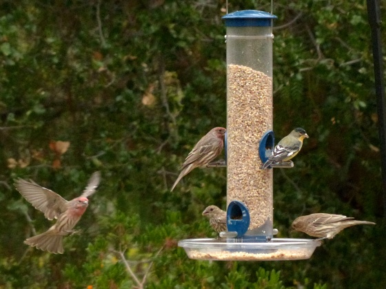 Finch Party