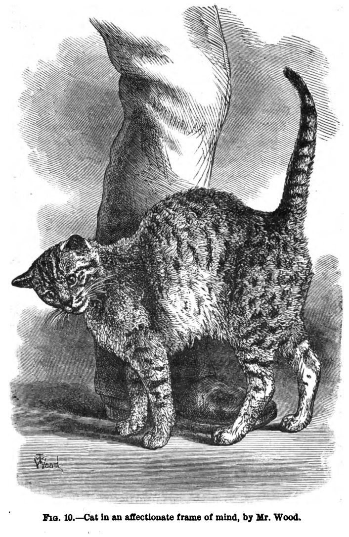 darwin-cat.jpg